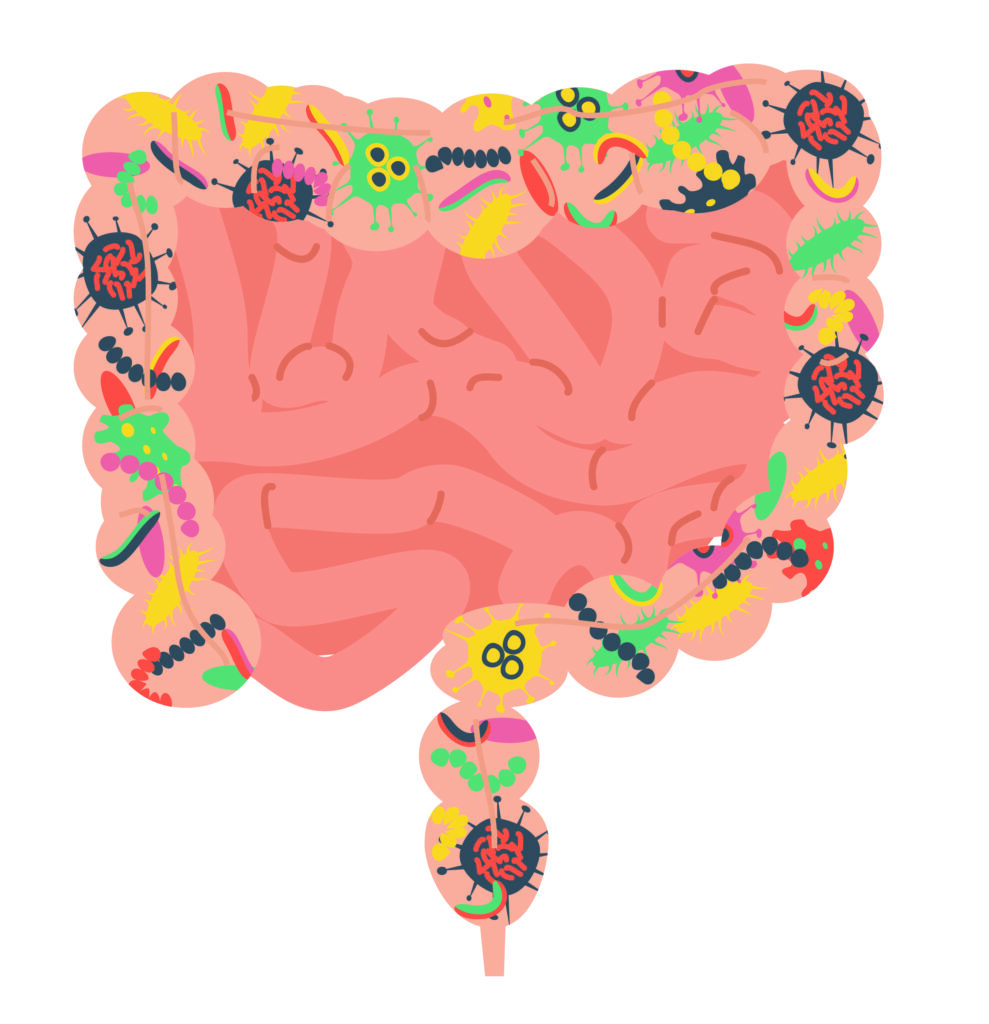 Leaky Gut, Illustration - Betterbio Health